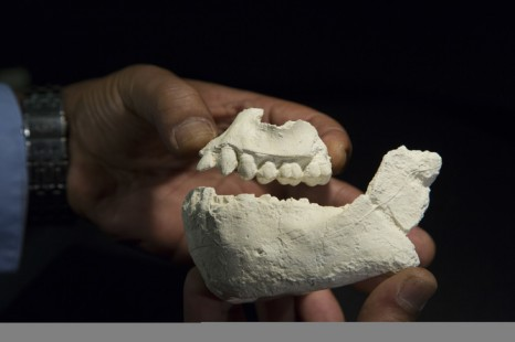 Scientists get their teeth into A. deyiremeda fossils. Credit: Laura Dempsey