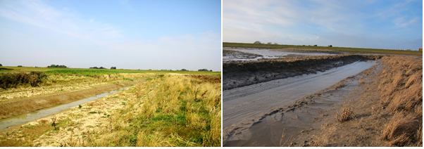 Head of the studied creek. Left: taken in September 2014. Right: taken in February 2015. The terrestrial vegetation is dying off and will be replaced by intertidal plants. Unfortunately it means the site is getting muddier and a lot less green.